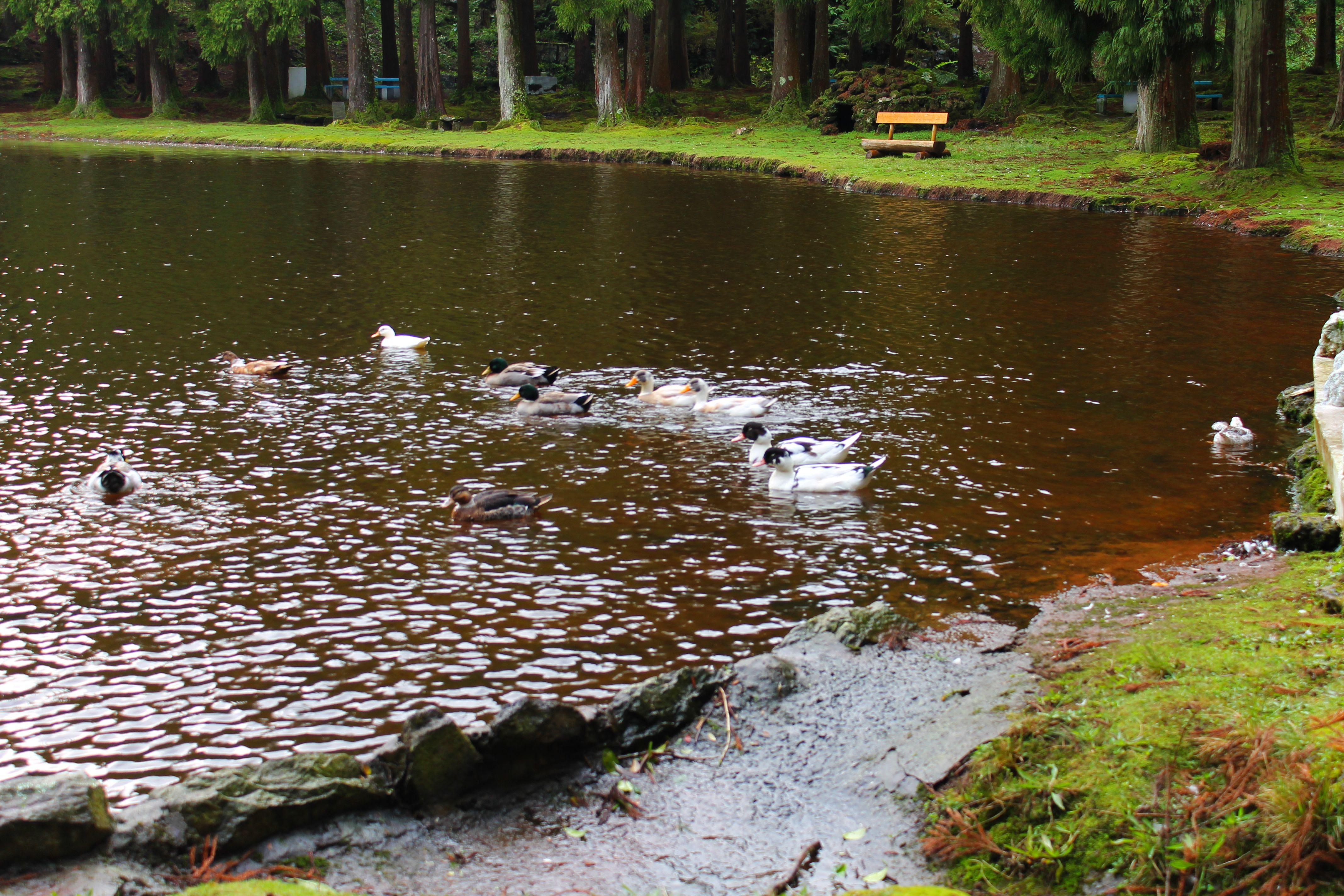 11 Ducks a Quacking