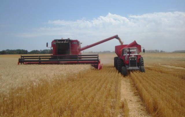 Liberan 1,3 toneladas más de trigo, pero el campo se queja por la caída del precio