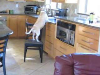 Τι μπορει να κανει το σκυλακι σας οταν λειπετε απο το σπιτι;