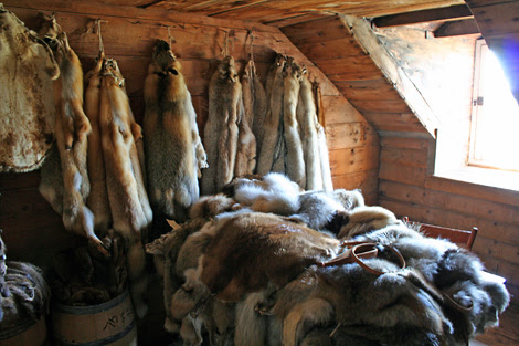 the fur shack