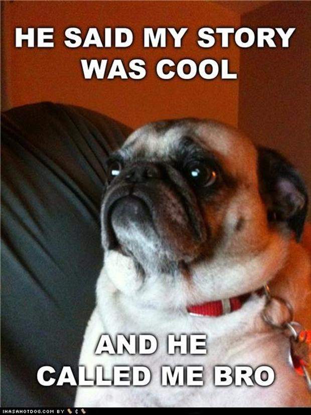 Funny Pug Dog Pictures 35 Pics