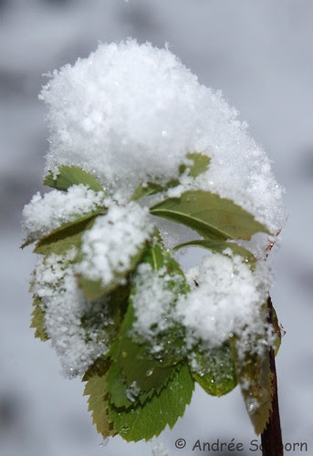 First Snow  -18.jpg