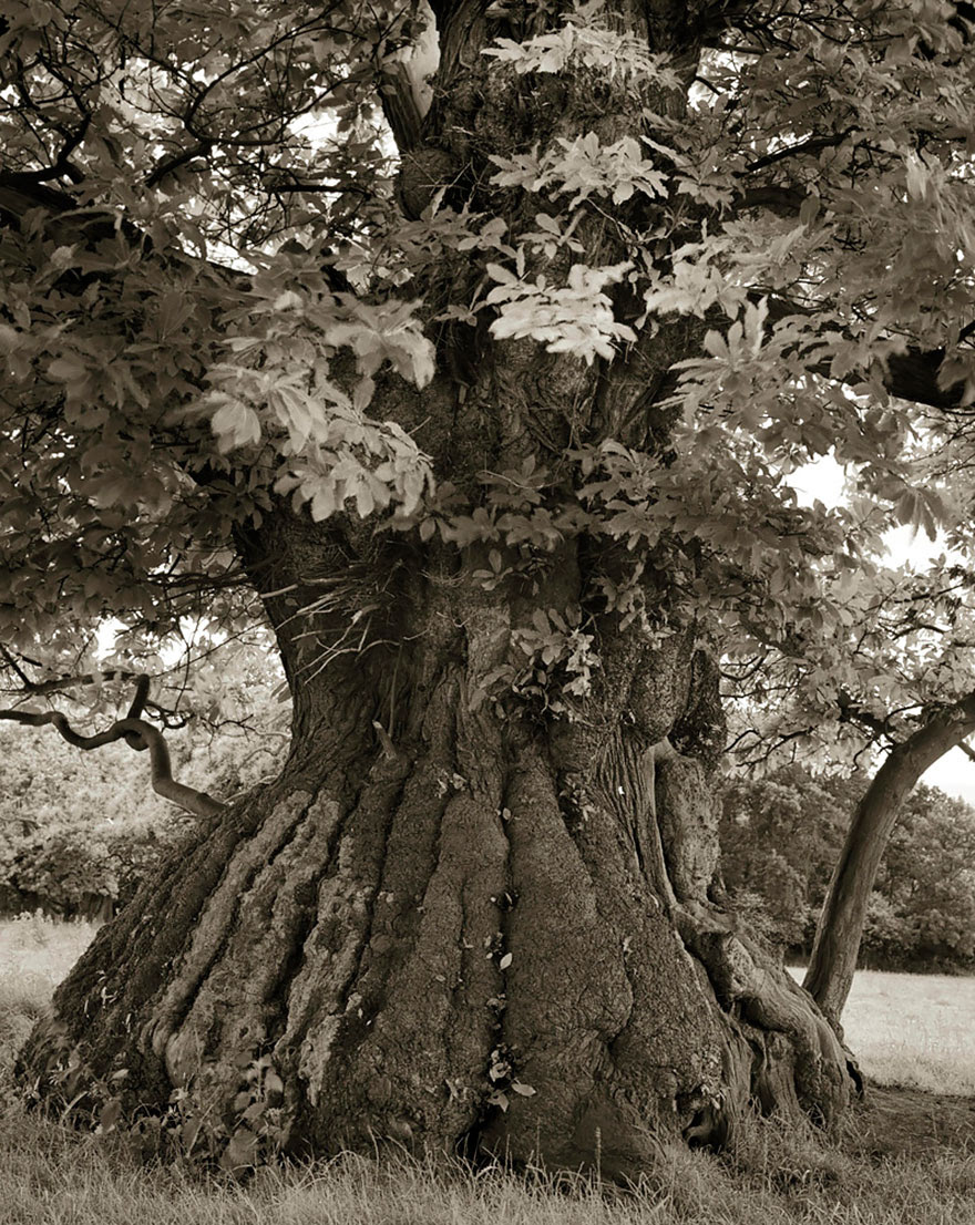 ancient-trees-beth-moon-12