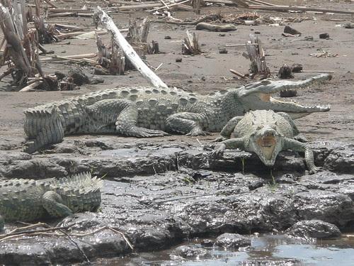 Costa Rica crocs
