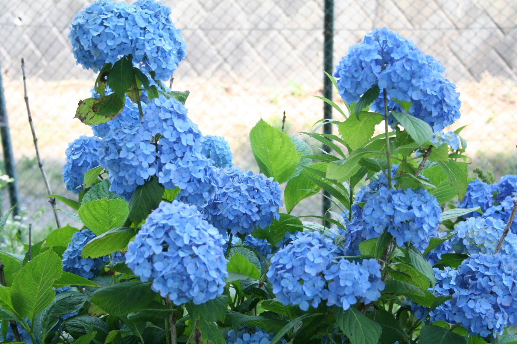 東武動物公園の花と自然公式ブログ6月の花その2