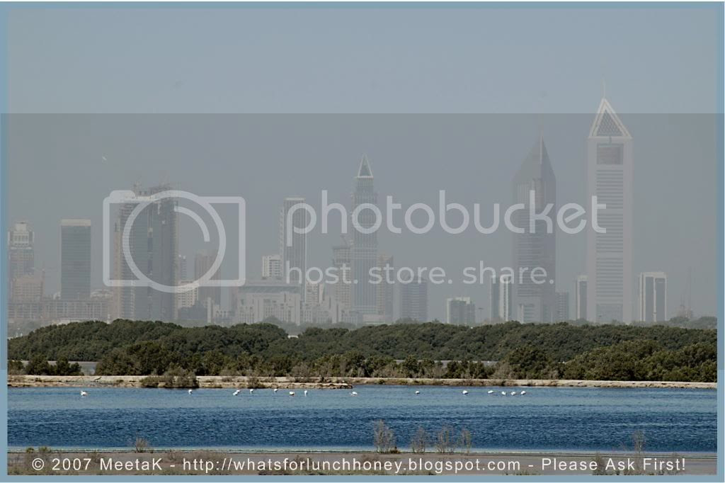 Dubai Bird Sanctuary by MeetaK