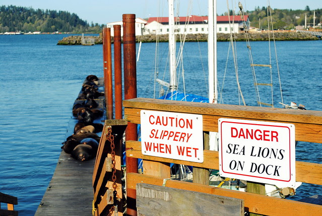 Sea Lions on the Docks - Astoria Oregon