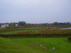 niagara wine pics 005