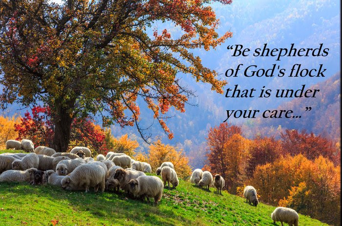Image result for shepherd and the sheep.