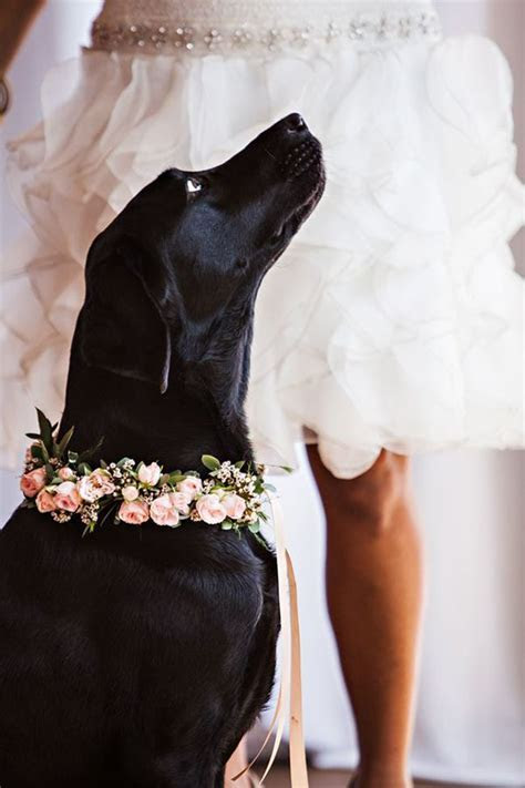 54 Photos of Dogs at Weddings That Are Almost Too Cute for
