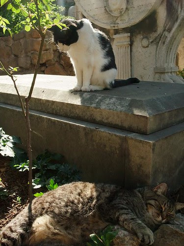 cats at the Protestant Cemetery - Cimitero protestante: Rome by mermaid99