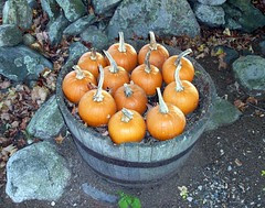 BucketofPumpkins_08