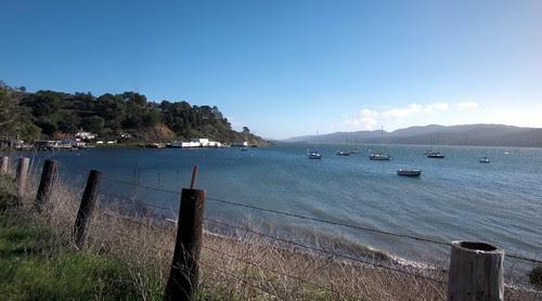Tomales Bay near marshall
