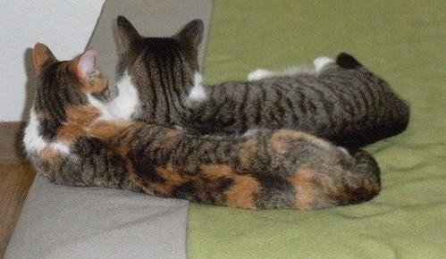 Motel Cats