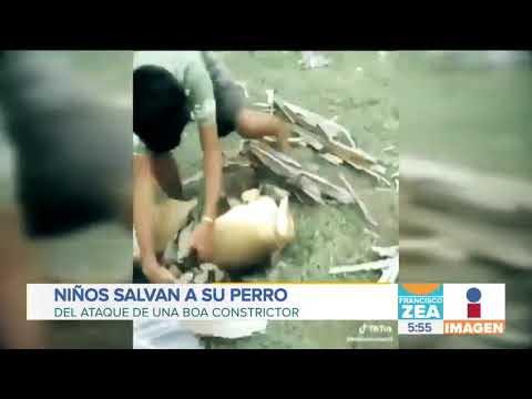 Mira todo lo que hicieron estos tres niños lucharon contra una boa para salvar a su perro (video)