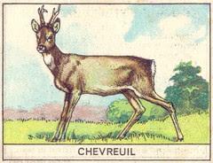 mart chevreuil