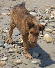 Lola Belle at the Beach