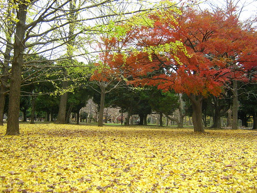 Red and golden leaves in Yoyogi Park