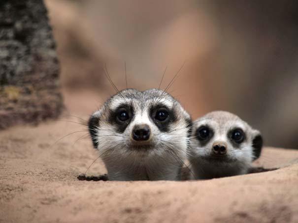 Υπέροχες φωτογραφίες φιλίας ζώων που θα σας φτιάξουν τη διάθεση (18)