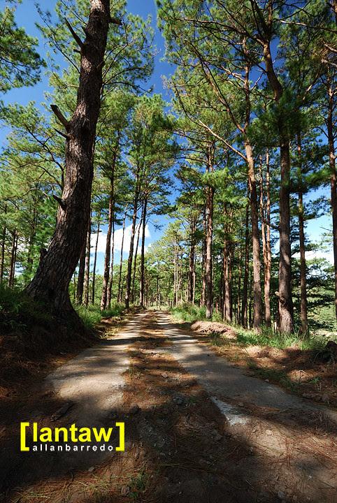 Salacsac Pine Forest 7