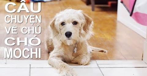 Cuộc sống Toronto - Câu chuyện về chú chó Mochi - Mochi Story movie