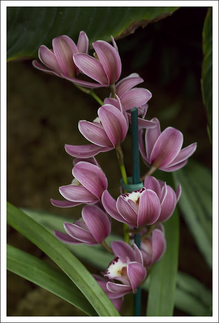 2014 Orchid Show 16