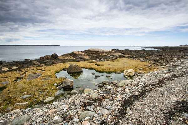 tide pools, at Odiorne Point State Park