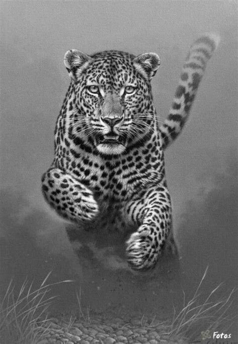 leopard cat coloring pages colouring adult detailed