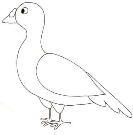 piccione stampa e colora disegno