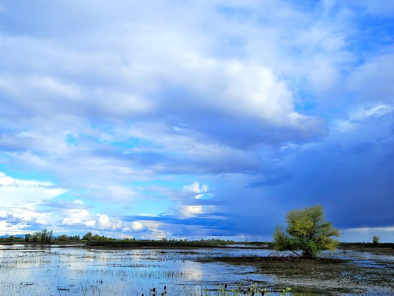 DSCN1217 Wetland in Spring