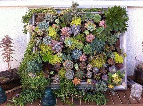 Hanging-succulent-DIY-garden-from-vintage-frame