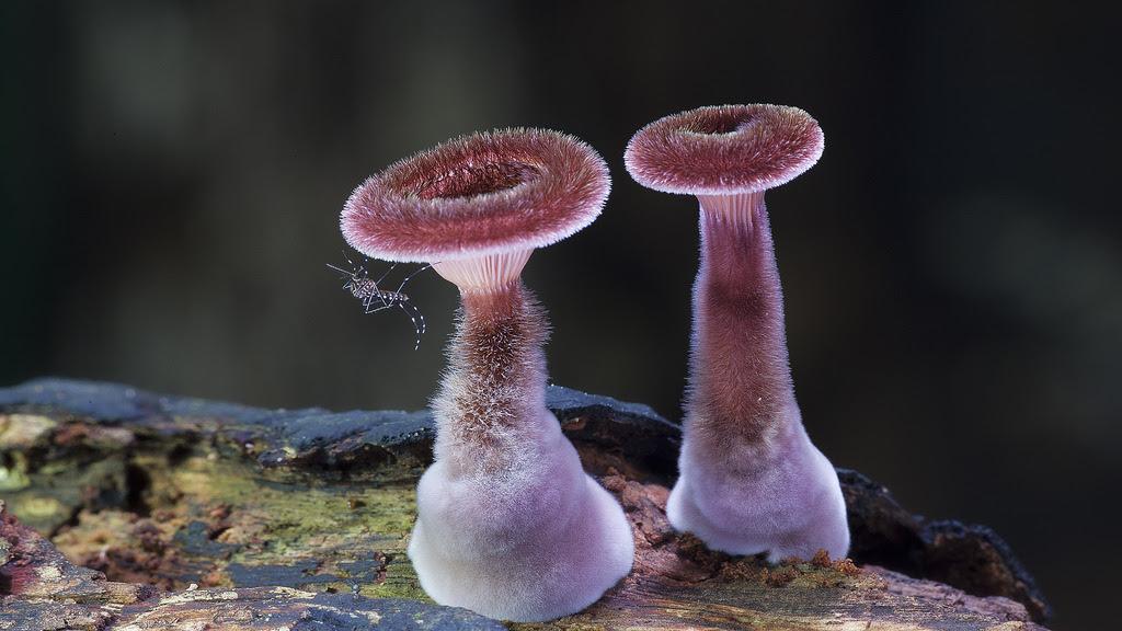 Fantastic Fungi: The Startling Visual Diversity of Mushrooms Photographed by Steve Axford science nature mushrooms Australia