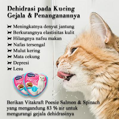 60 Gambar Jantung Pada Hewan Kucing Terbaru