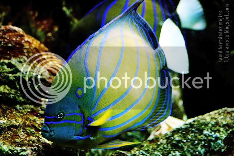 Fotografía de un colorido pez realizada en el Aquarium del Parque Zoológico de Madrid