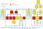 Thumbnail of Family relationships and household distribution of persons infected with MERS-CoV, Al-Qouz, Saudi Arabia, 2014. Black lines denote standard family tree relationships. Patients are lettered in order of symptom onset or, if asymptomatic, by test date. Green boxes indicate households; all persons living in households 1–4 were tested, except for 2 adults living in household 4 (not shown). Index patient (person with earliest symptom onset diagnosed by rRT-PCR) in each household is underl