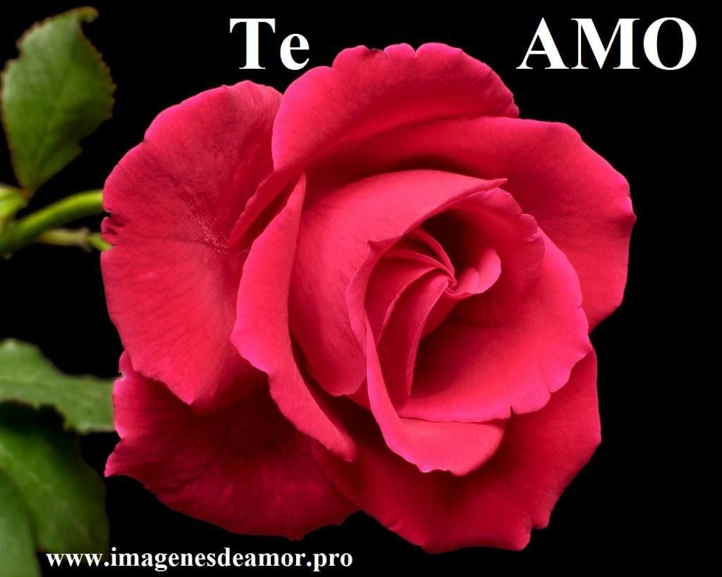 5 Imagenes De Hermosas Rosas Con Frases Cortas