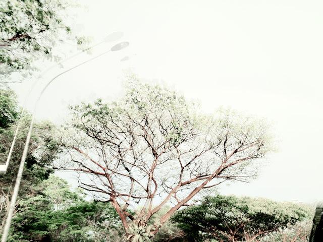 chio shot by typicalben 3