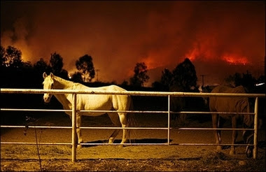Horse and wild fire