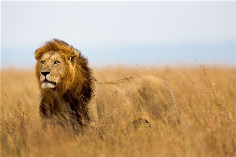Leão mata turista norte-americana