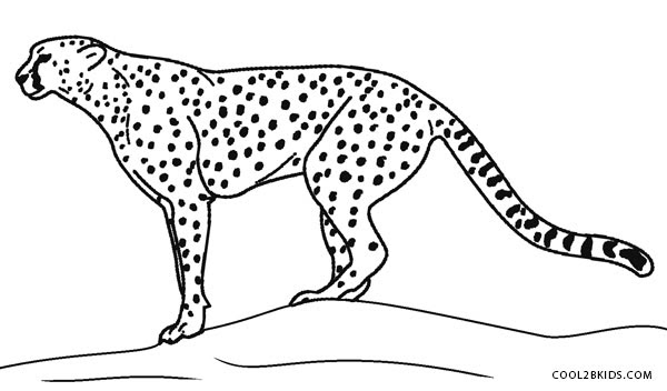 Cheetah Coloring Page - GetColoringPages.com | 352x600