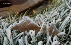 Frost_8371
