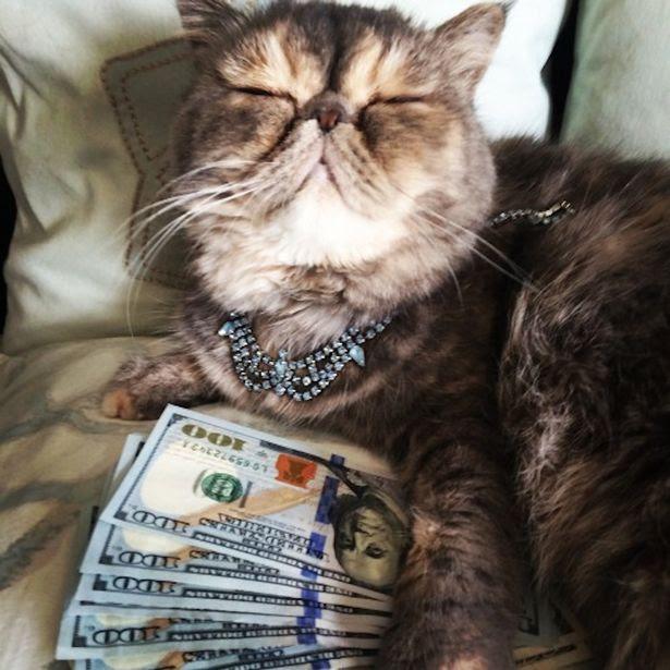 Cats amp cash кошки и деньги Орехово-Зуево