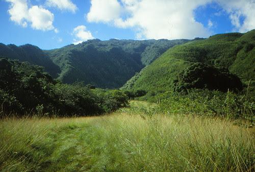 IMG_00836_Trail_to_Waimoku_Falls_Hana_Maui