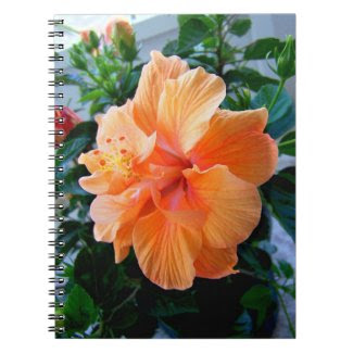 Peach Hibiscus Journals