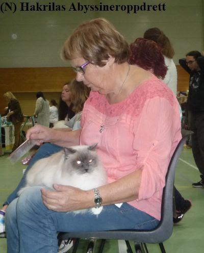 Min rasekattvenninne Anne Grethe (som er med i samme rasekattklubb som meg) med sin kjempefine ragdollhunnkatt (Solstråle) på fanget :)