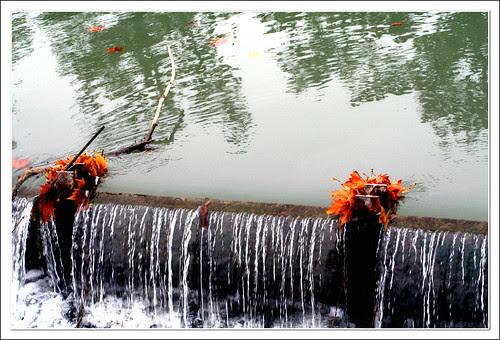 hojas en la corriente