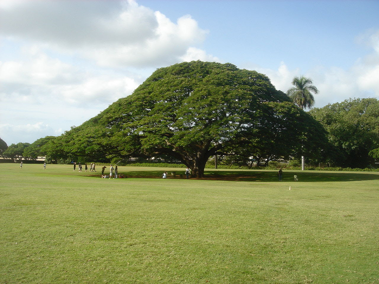 Hitachi's_tree.jpg