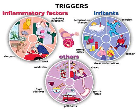 Asthma - ANATOMY AND PHYSIOLOGY