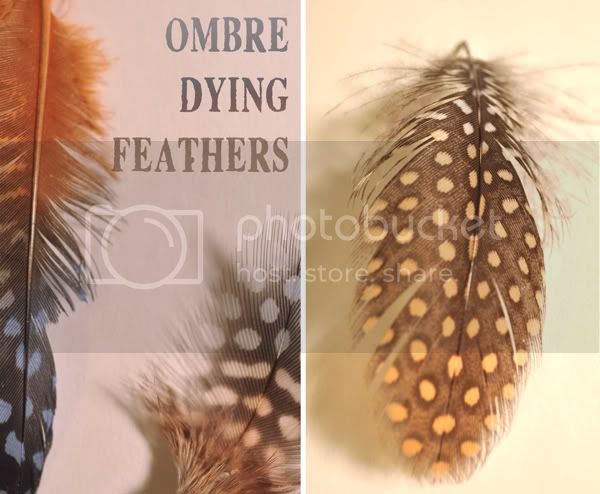 Ombre Dying Feathers by (Indie) Pretty Projects