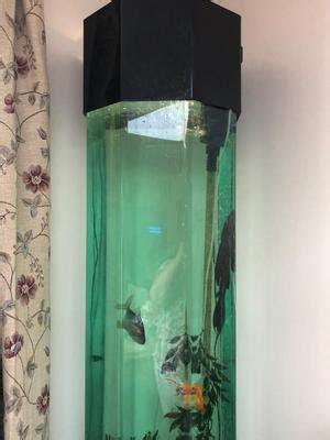 stunning twin hexagonal fish tank bargain  posot class
